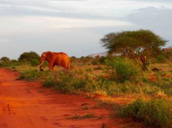 kenia-afrika-reise-bilder-191
