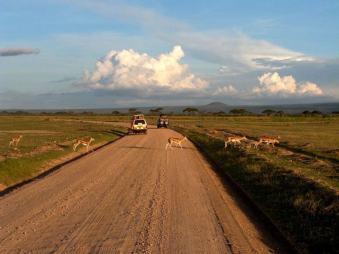 Serengeti Bilder aus Kenia