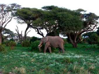 kenia-afrika-reise-bilder-388