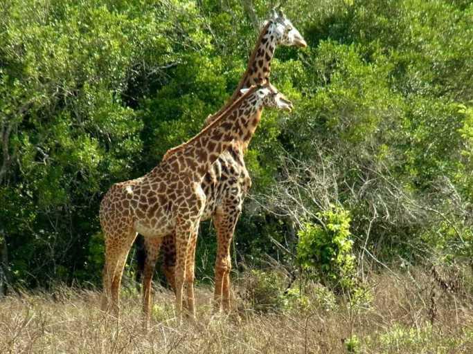 kenia-afrika-reise-bilder-825