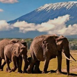 Elefanten Kilimanjaro Amboseli Kenia - Kenia safari Kenia reisefuehrer für mit reisetipp für familien reisen.
