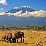 Kilimanjaro-Elefanten - Kenia safari Kenia reisefuehrer für mit reisetipp für familien reisen.