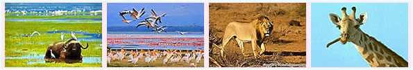 Vorsicht vor kenia safari betrug.