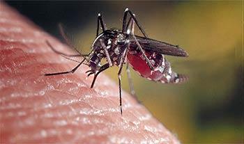 Die Anopheles-Malariamücke - Kenia Vorsichtsmassnahmen