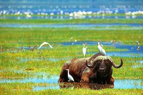 Nakuru - Kenia Komfort safari und Flitterwochen 13 tage ab Nairobi