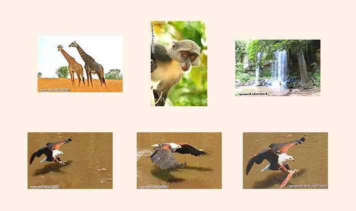 kenia reise urlaub tages safari