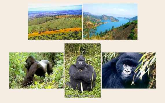 Ruanda Uganda reise urlaub berggorillas safaris