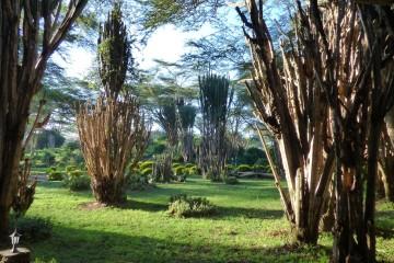 Kenia Safaritagebuch - Hells Gate Nationalpark