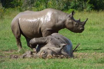 Kenia Safari Tagebuch