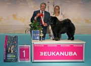 Chow Chow Kennel Hjelme Piuk Chow Possesses Black Passion BIG Herning 2015, Peter L Jensen