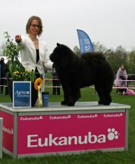 Kennel Hjelmes chow chow Bedst i gruppen 3 i Rosilde 2015. Piuk Chow Possesses Black Passion