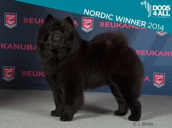 Kennel Hjelmes Chow Chow Nordisk Vinder 2014. Piuk Chow Possesses Black Passion