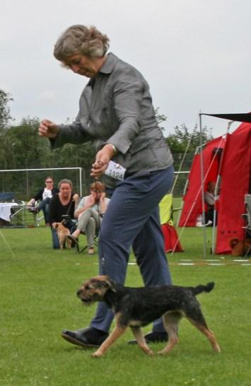 Kennel Hjelme Border Terrier Hjelme Once Upon A Time i bevægelse