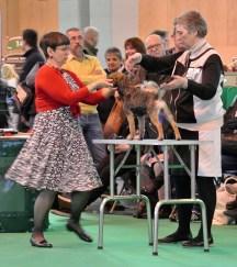 Kennel Hjelme Border Terrier Hjelme Lagavulin på Crufts 2015