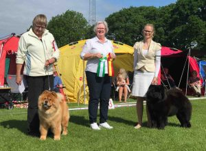 Chow Chow Hjelme Piuk Chow Possesses Black Passion og Stine Hjelme, Anne Indergaard