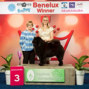 Chow Chow Hjelme Piuk Chow Possesses Black Passion og Stine Hjelme, Benelux Winner