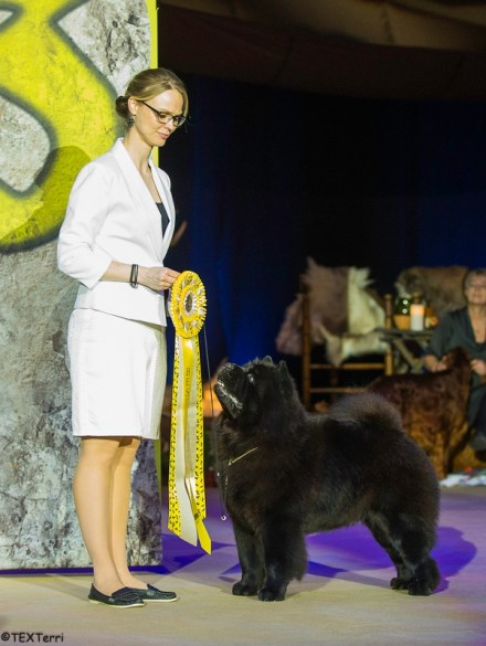 Chow Chow Hjelme Best In Show Piuk Chow Possesses Black Passion, Stine Hjelme Best In Show