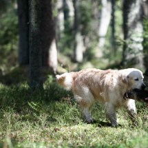 Retriever's Qualifing test