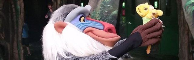 Rafiki meet and greet at Animal Kingdom in Walt Disney World