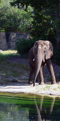 Kilimanjaro Safaris Noctural Adventures - 7 new nightime offerings coming to Disney's Animal Kingdom in April