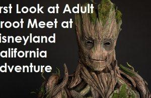 First Look at Adult Groot Meet at Disneyland California Adventure