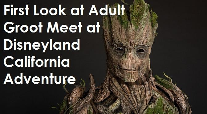 First Look at Adult Groot Meet at Disneyland California Adventure Summer 2017