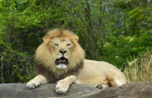 4 Ways to Get the Purrfect Lion Photos