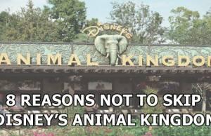 8 Reasons Not to Skip Disney's Animal Kingdom