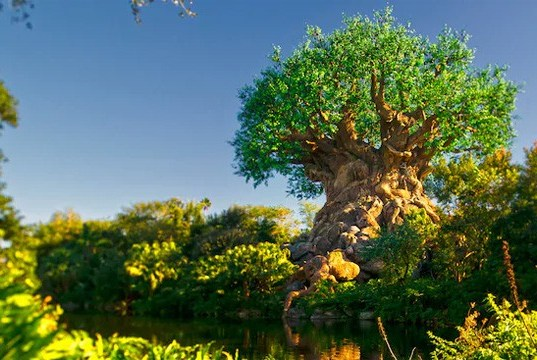 Disney's Animal Kingdom Closing Early on Select Nights in April
