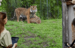 """Animal Kingdom to Offer """"A Path Less Traveled"""" Tour"""