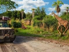 Guests Allowed to Remove Masks on Kilimanjaro Safari