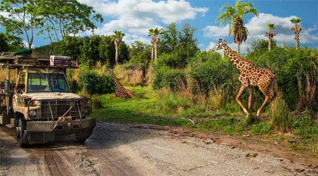 A Brand New Baby Giraffe is Born in Disney World