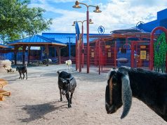 Animal Kingdom's animal petting zone to re-open soon