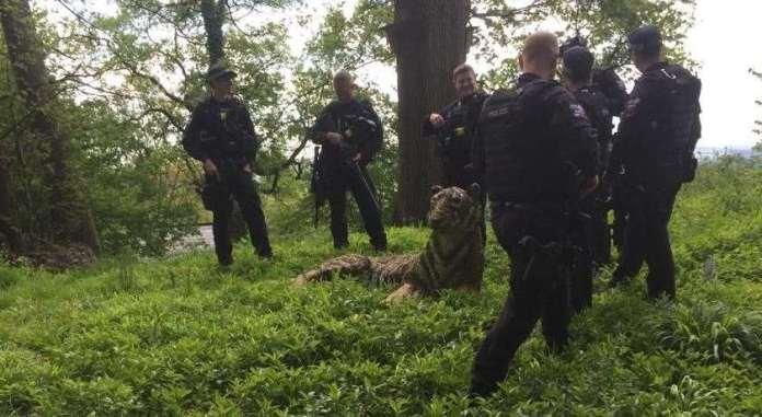 Police officers surround wild beasts. Photo: Juliet Simpson