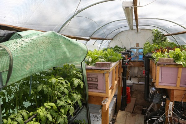 Cold Weather Aquaponics Greenhouse Shot