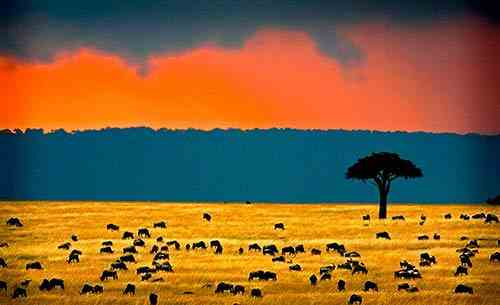 Climat du Kenya, soleil, pluie, mousson pour votre safari