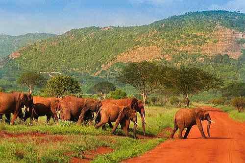 Elefanten - Kenia Parks und Reservate - Karte und Plan des Tsavo West Parks in Kenia