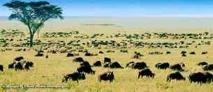Vue - Safari Chic grande migration