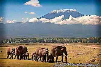 Eléphants devant le Kilimanjaro safari Kenya plus extension Gorilles Rwanda Ouganda