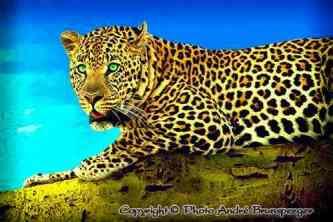 Léopard safari Kenya plus extension Gorilles Rwanda Ouganda
