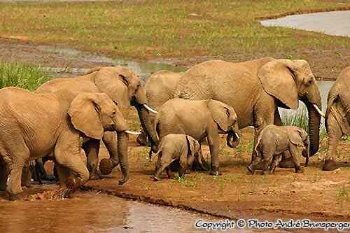 Eléphants - Réserve Samburu Buffalo Springs Kenya