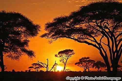 Voyage de Noces 15jours Kenya Tanzanie Zanzibar