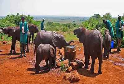 Elephants - Kenya travel Shimba hills safari one day