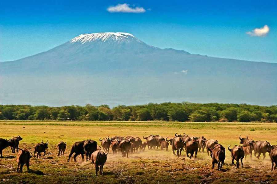 Kenya Tsavo Amboseli safari 4 days
