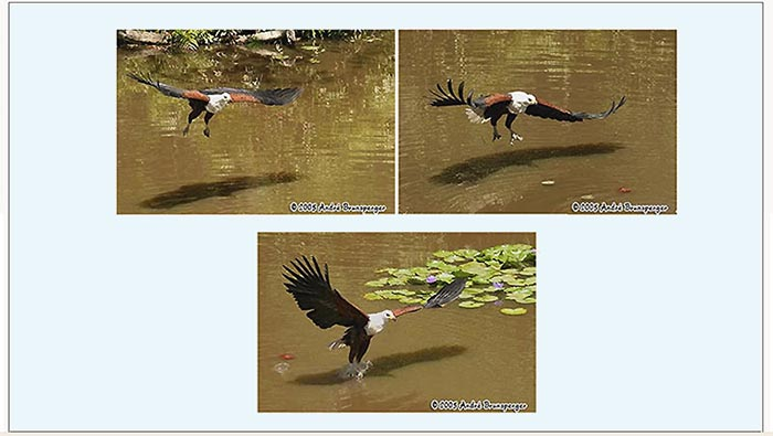fish eagle - Kenya travel Shimba hills safari one day