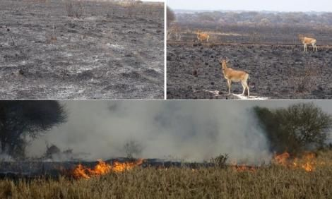 The aftermath of the fire incident at Tsavo Conservation area