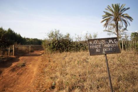 A picture take at Kakuzi farm.