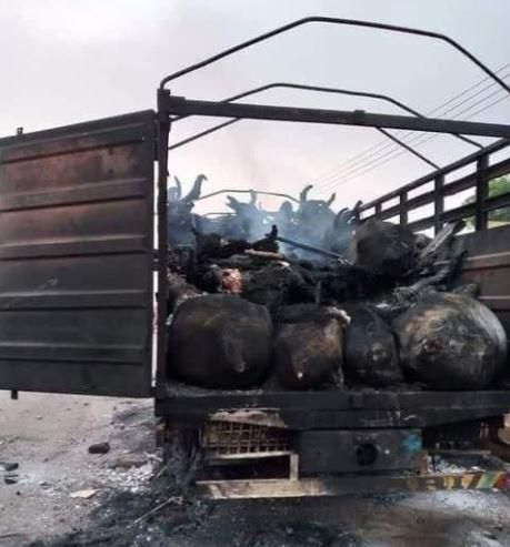 Cows that were burnt after a truck transporting them killed a boy in Nigeria on January 13, 2021.