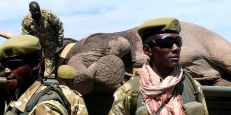 File image of KWS rangers