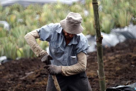 A man attending to his farm